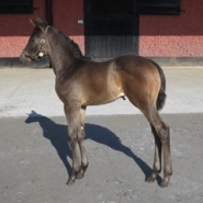 Seal of Approval has a cracking filly foal.
