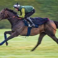 THE TIN MAN On Track For Haydock